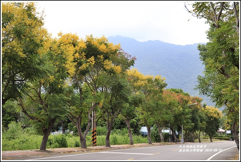 瑞穗溫泉路台灣欒樹-2019-09-14.jpg