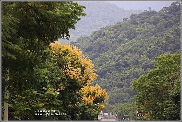 瑞穗溫泉路台灣欒樹-2019-09-20.jpg