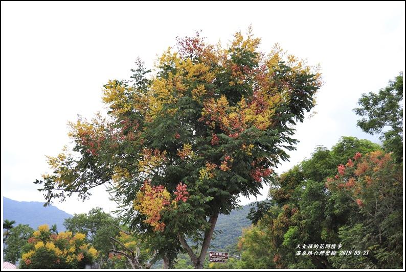 瑞穗溫泉路台灣欒樹-2019-09-22.jpg