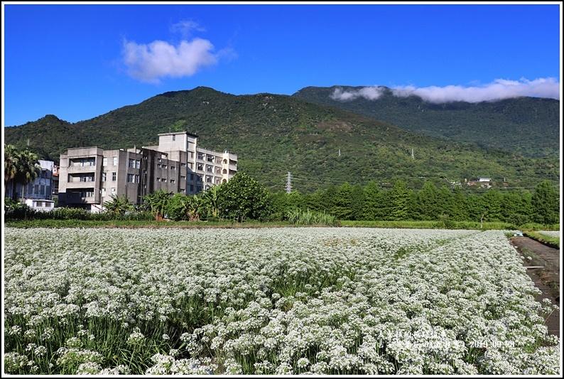 吉安韭菜花田(九月雪)-2019-09-11.jpg