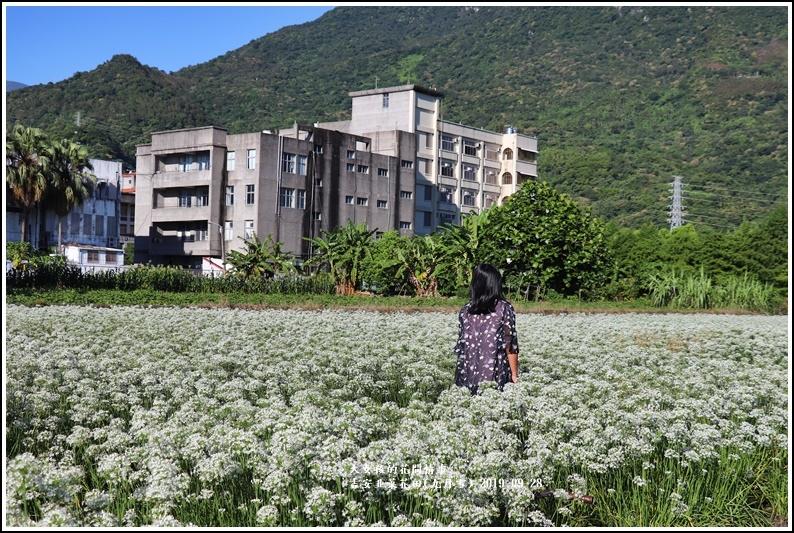 吉安韭菜花田(九月雪)-2019-09-18.jpg