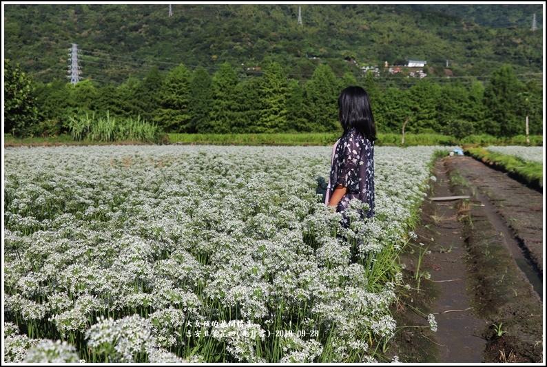 吉安韭菜花田(九月雪)-2019-09-20.jpg