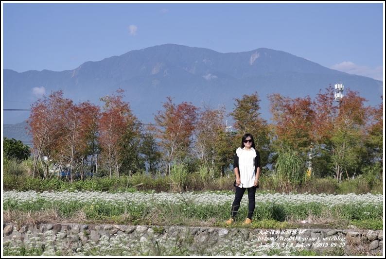 吉安九月雪(韭菜花田)-2019-09-18.jpg