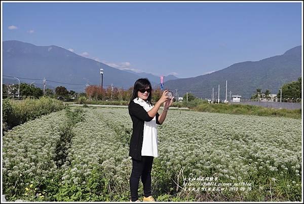 吉安九月雪(韭菜花田)-2019-09-23.jpg