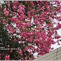 玉里鎮民廣場公園美人樹-2019-09-05.jpg