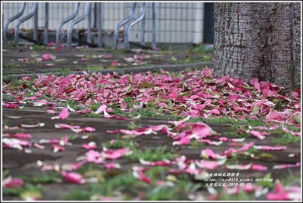 玉里鎮民廣場公園美人樹-2019-09-11.jpg