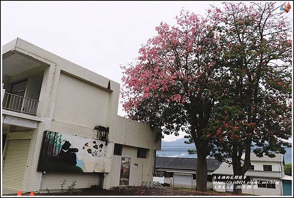 玉里鎮民廣場公園美人樹-2019-09-12.jpg