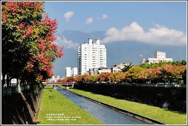 七腳川溪台灣欒樹-2019-10-04.jpg