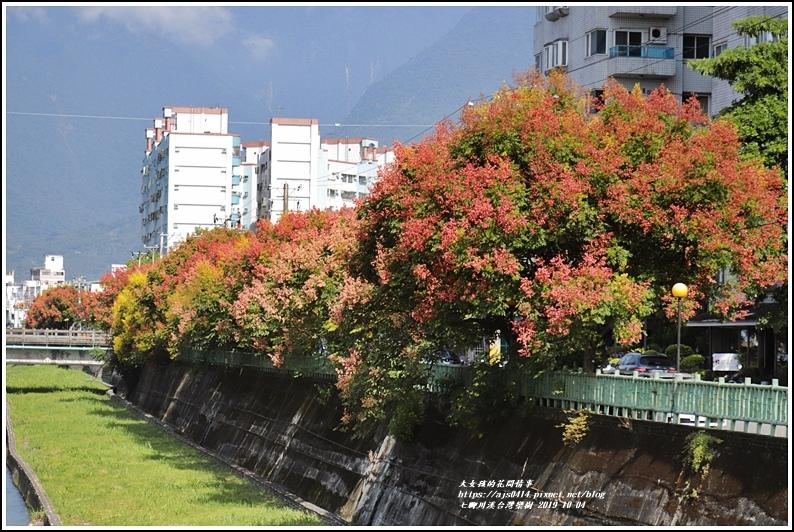 七腳川溪台灣欒樹-2019-10-18.jpg
