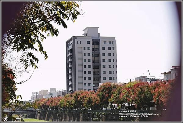 七腳川溪台灣欒樹-2019-10-19.jpg
