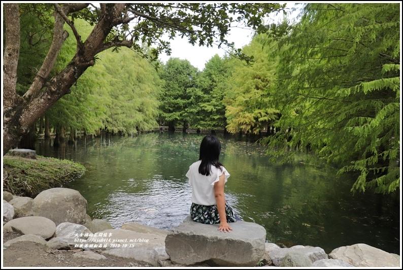 鈺展落羽松森林-2019-10-48.jpg