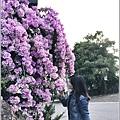 蒜香藤-2019-10-50.jpg