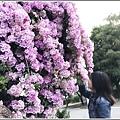 蒜香藤-2019-10-51.jpg