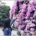 蒜香藤-2019-10-52.jpg