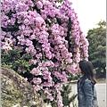 蒜香藤-2019-10-49.jpg