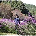 武陵農場墨西哥鼠尾草-2019-10-06.jpg