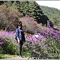 武陵農場墨西哥鼠尾草-2019-10-07.jpg