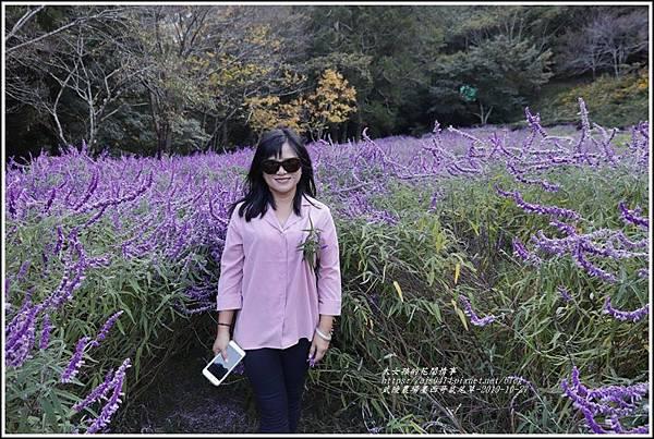 武陵農場墨西哥鼠尾草-2019-10-48.jpg