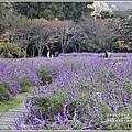 武陵農場墨西哥鼠尾草-2019-10-72.jpg