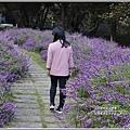 武陵農場墨西哥鼠尾草-2019-10-69.jpg