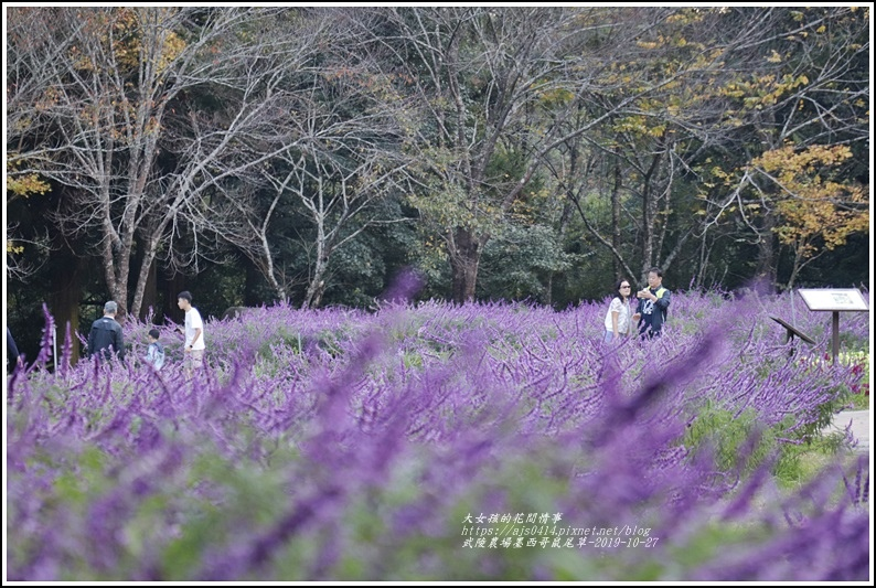 武陵農場墨西哥鼠尾草-2019-10-73.jpg