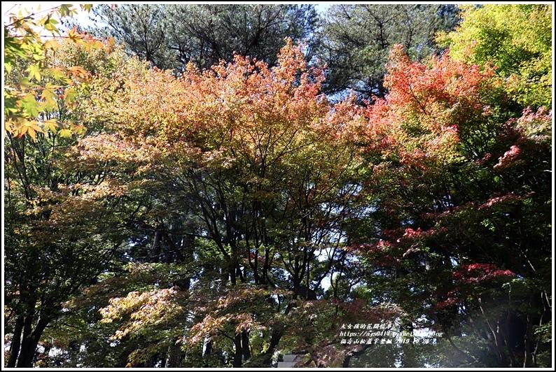福壽山松盧掌葉楓-2019-10-10.jpg