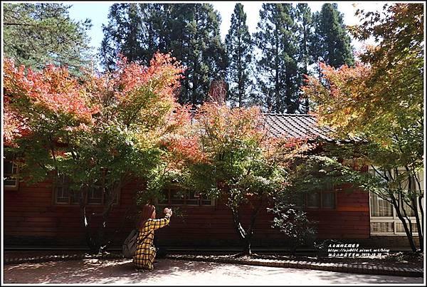福壽山松盧掌葉楓-2019-10-13.jpg