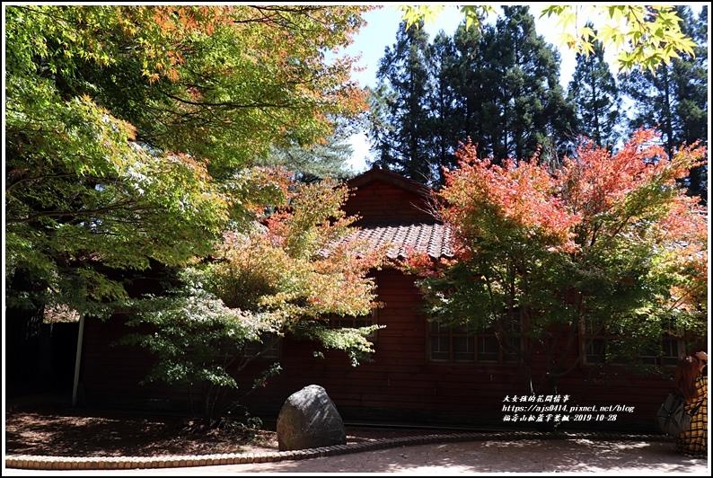 福壽山松盧掌葉楓-2019-10-17.jpg