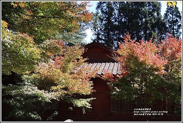 福壽山松盧掌葉楓-2019-10-16.jpg