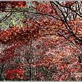 福壽山農場楓紅-2019-10-02.jpg