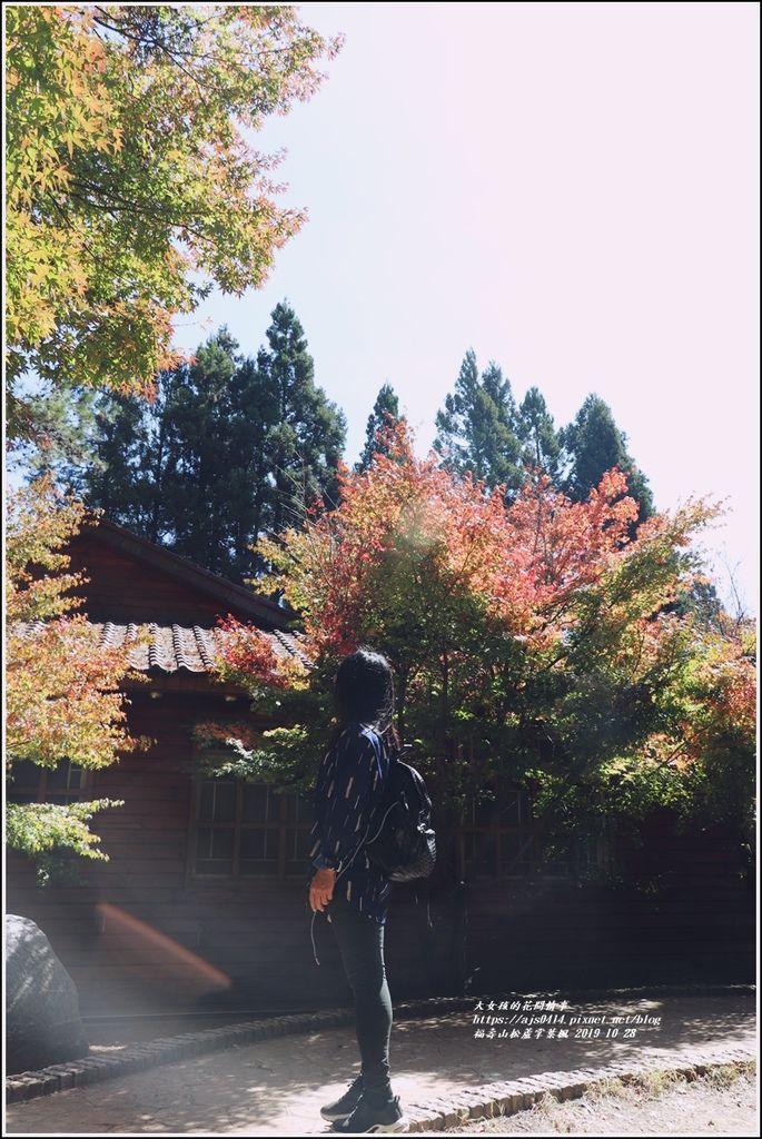 福壽山松盧掌葉楓-2019-10-18.jpg