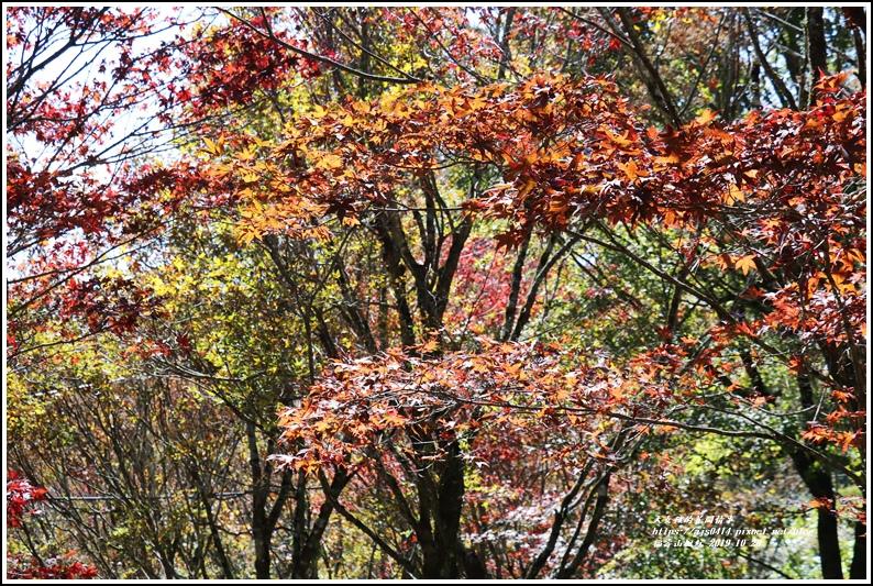 福壽山農場楓紅-2019-10-01.jpg