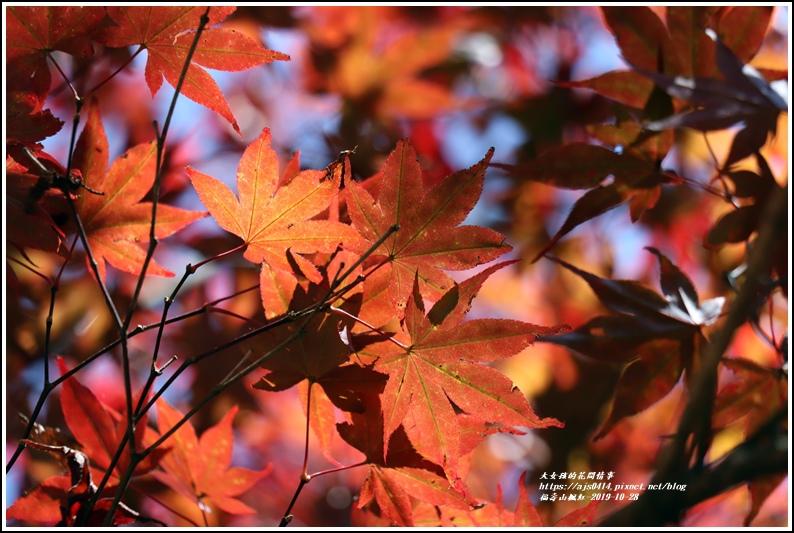 福壽山農場楓紅-2019-10-07.jpg