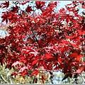 福壽山農場楓紅-2019-10-09.jpg