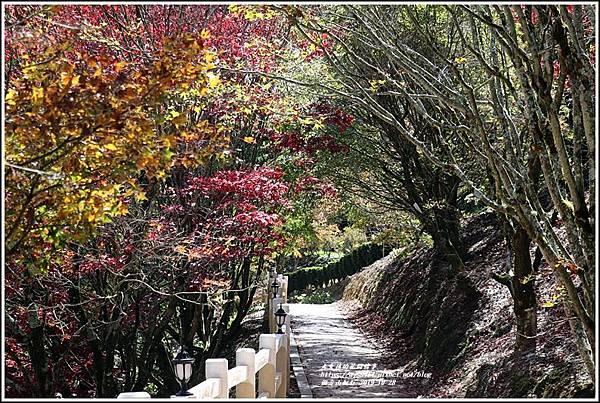 福壽山農場楓紅-2019-10-08.jpg