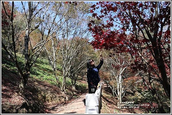 福壽山農場楓紅-2019-10-10.jpg