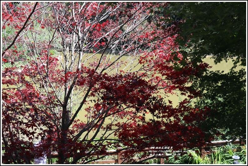 福壽山農場楓紅-2019-10-11.jpg