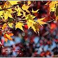 福壽山農場楓紅-2019-10-14.jpg