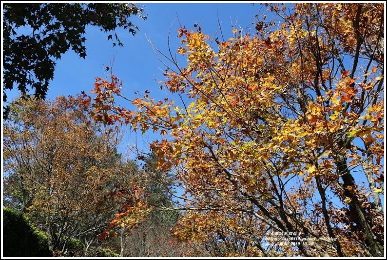 福壽山農場楓紅-2019-10-13.jpg