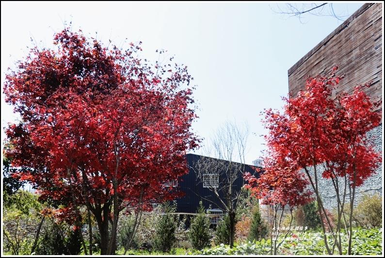 福壽山農場楓紅-2019-10-22.jpg