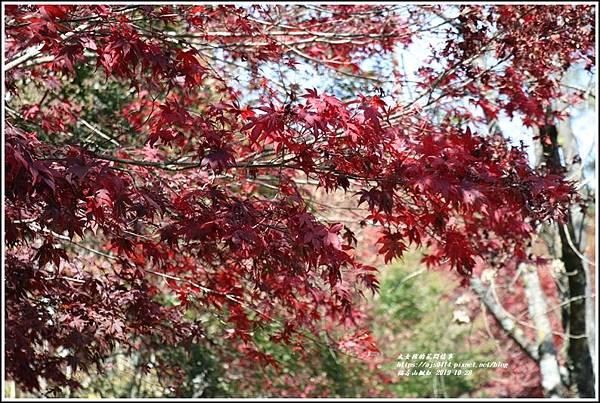 福壽山農場楓紅-2019-10-32.jpg