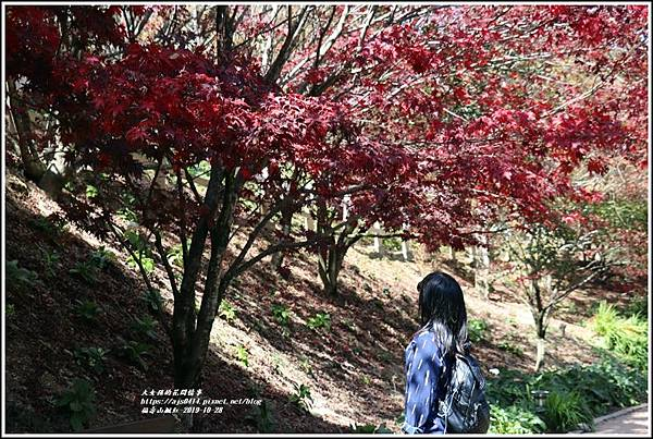 福壽山農場楓紅-2019-10-30.jpg