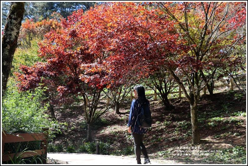 福壽山農場楓紅-2019-10-44.jpg