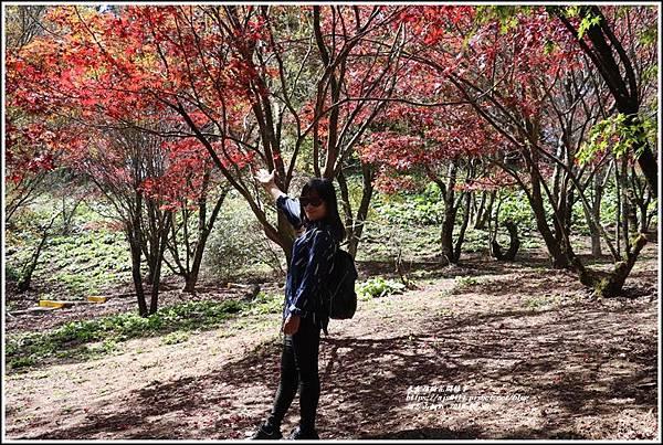 福壽山農場楓紅-2019-10-46.jpg