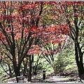 福壽山農場楓紅-2019-10-49.jpg