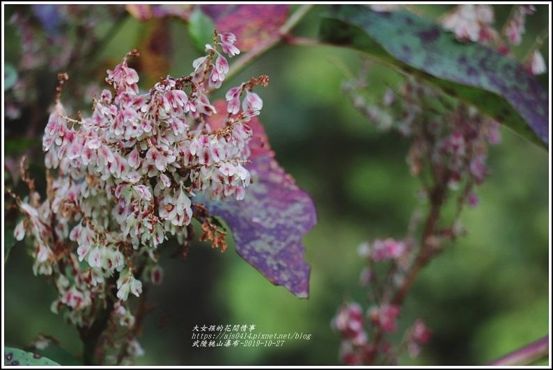 武陵桃山瀑布-2019-10-49.jpg
