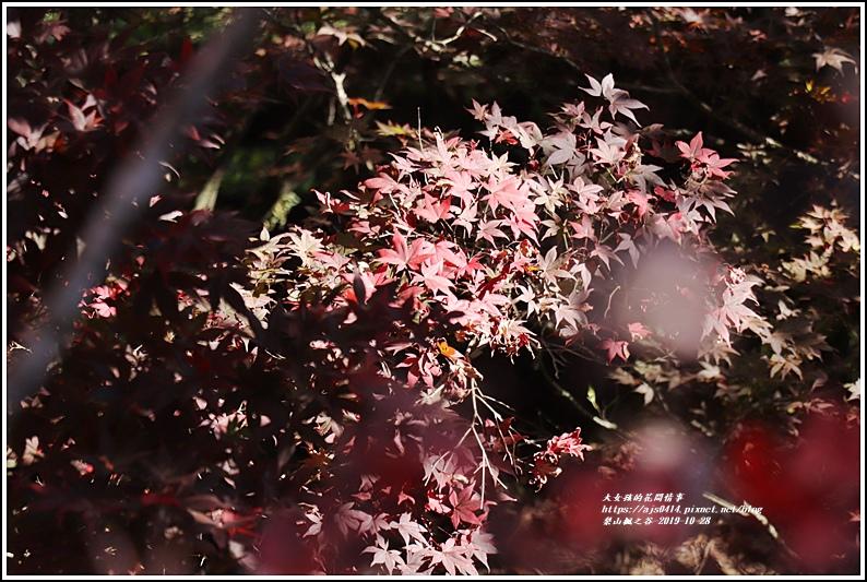 梨山楓之谷-2019-10-05.jpg