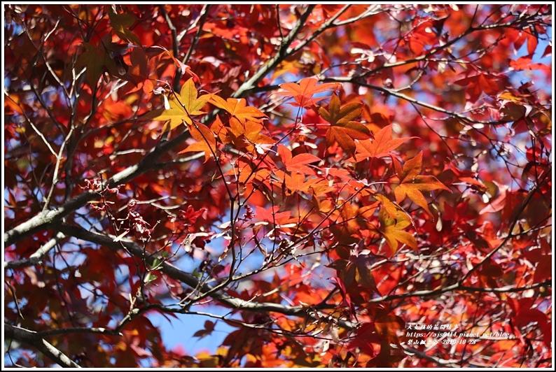 梨山楓之谷-2019-10-11.jpg