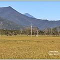 富興社區黃金稻-2019-11-01.jpg