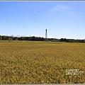 富興社區黃金稻-2019-11-08.jpg